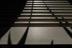 MiA_office shadows_20180508_3471